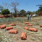 #EconomiaPA Intermediarios del Mercado de Abastos venden la libra de cebolla $0.05 de más. http://t.co/A5KneKcm3W http://t.co/TsI6nT8crm