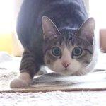 猫、こうやってお尻フリフリする(動画) http://t.co/lZkqNbypfc http://t.co/1m9VzHuAra
