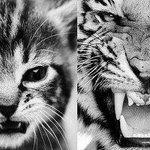 С возрастом меняется многое! Меняется мнение, желания, взгляды, меняемся мы сами. #новости #беларусь #twiby http://t.co/SpfIbShjo0