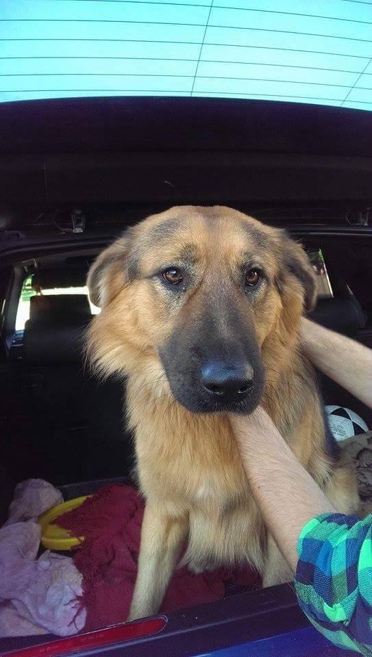 Lūgums atsaukties suņa saimniekam! Suņuku atradām pie Sporta manēžas un nogādājām Dr. Beinarta vet. klīnikā! #RT http://t.co/g6Ccfxjewv