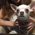 Прошу RT Помогите собаченьке вернуться к хозяину. Найден в Харькове, Ботанический сад. http://t.co/IoYHGea9Dm