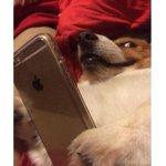 cuando le coges el móvil a un amigo http://t.co/Ru25nyrlaZ