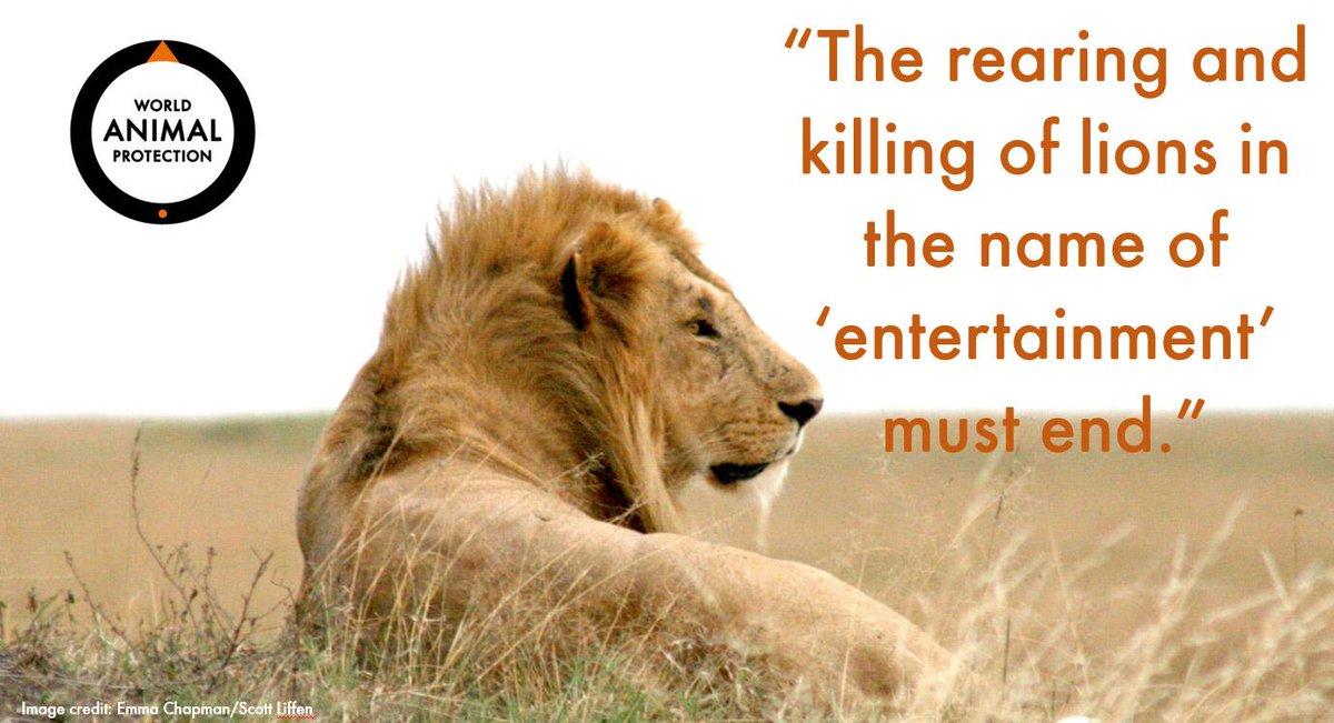 The rearing and killing of lions in the name of 'entertainment' must end. #CecilTheLion Please retweet! http://t.co/wZRYmKhCWE