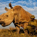 @RickyGervais This is half of the Northern White #Rhino population http://t.co/kzNZyBrztm @UN @cites #CecilTheLion http://t.co/iAiO6bVqR6