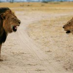 BREAKING: #CecilTheLion s brother, Jericho, has been shot dead by poachers http://t.co/hPeiWoNdua http://t.co/vCqJzOzz3c