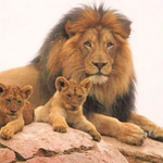Cecil the lion's brother is protecting his cubs from rival males http://t.co/wyqXm1NyeD http://t.co/QFVJn1hjf9