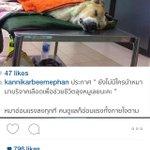 เคสด่วนค่ะ😢 .. ลุงหมู🐶 ต้องการรับบริจาคเลือด รายละเอียดตามภาพนะคะ #ช่วยลุงหมูด้วย #อนุโมทนาค่ะ 🙏🏻 http://t.co/SnSC6AojHv