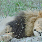 .@barbarastarrcnn never met #Cecil, but she wont forget the lesson of the lion she did meet http://t.co/FrUF5FiERW http://t.co/f6x98IE1sD