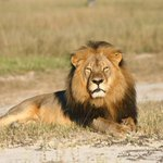 Zimbabwe announces hunting restrictions in area where Cecil the lion was killed http://t.co/ynVArQhz7F http://t.co/QCRLNrcARK