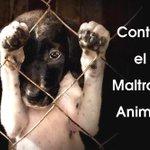 #EnormesGanasDe seguir luchando por un mundo SIN maltrato a los animales http://t.co/s6KTQzHki9