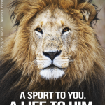 """There is nothing """"sporty"""" about shooting an innocent animal with a bow & arrow. #BanHunting #CecilTheLion http://t.co/xLH9NMrV0Y"""