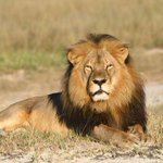 BREAKING: Cecil the lion's brother, Jericho, illegally shot, killed by a hunter http://t.co/DCYR6OQQgG http://t.co/T5z3Xv1lfM