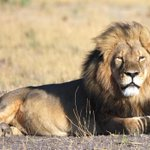 After #Cecil, 2nd lion reportedly poached by foreign tourist in Zimbabwe http://t.co/zgKG50OHcw http://t.co/7ah9PukFnP