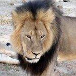 Ancora choc in #Zimbabwe: cacciatori di frodo uccidono #Jericho, il fratello di #Cecil http://t.co/HcSoFqnkOD http://t.co/eHEcC7YYfw