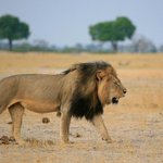 Zimbabwe suspends hunting in area where Cecil the lion was killed http://t.co/9YWc6t9NUh http://t.co/FpAjPXEKQf