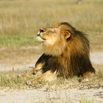Researcher monitoring brother of #CecilTheLion says Jericho is not dead, contradicting earlier reports. http://t.co/7vyivCcWUD