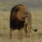 Jericho, Cecil the lions brother, is not dead, despite rumors: http://t.co/KG3nKLpqkd. http://t.co/yIE9NwDlEz
