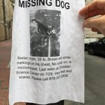 Baxter was lost in #BackBay - be on the lookout, #Boston. Hope he finds his way home soon. http://t.co/suhfYDzOtr