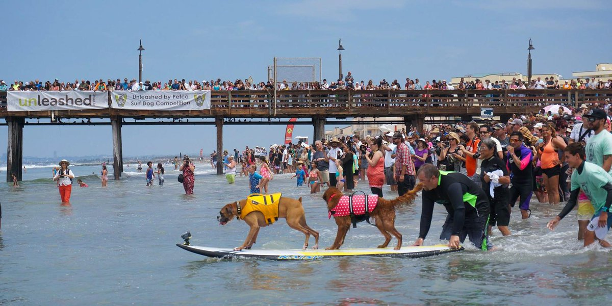 Thanks to everyone who joined us today at #SurfDogUnleashed benefitting animals in need  @sdhumane! http://t.co/1Q2nnFJmBP