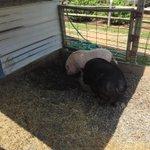 Hoy andaba de granja y ví un pana mío allá le mandó saludo @PapaTendencia @GeralStaar @WillyJay__ @iKen_Bx3 ???????? http://t.co/YRZhFBMR5c