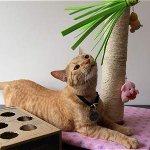 Prepare un ambiente de diversión para su gato http://t.co/spolzXuweW http://t.co/U6WCfQUKtB