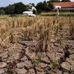 Kabupaten Bandung Minta Desa yang Kekeringan Ajukan Bantuan http://t.co/1En9Ekw01r #infoBDG http://t.co/mfGxwK5FWQ