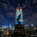 RT to help us thank the @EmpireStateBldg for giving endangered species the spotlight #RacingExtinction http://t.co/k1qxTH9Q6A