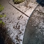 Wallaby tracks in the #snow on our #Hobart garden #tasmania with @jamesatbond http://t.co/XuYRJuy3vy