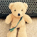 #Homeless #Teddy found in #Cambridge yesterday Please RT. Contact @HayleySoprano to reclaim #StreetSoprano😊  http://t.co/IyLvbI7DxM