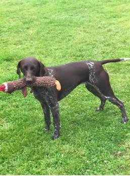 """@millypod1: #STOLEN Shorthaired Pointer Female HELP #Wanlip #Leicester #Leicestershire #LE7 http://t.co/k8V3ENLBj6 http://t.co/ZTNtzg8eyK"""
