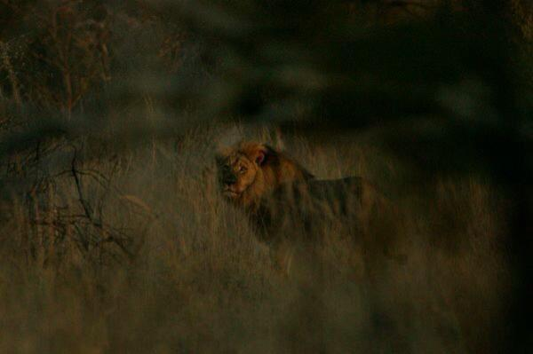 From the great people @AfricanBushTwit Pics of #Jericho & #CecilsPride http://t.co/z5DkIQNyjv