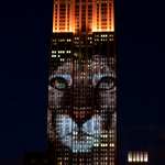 Cecil the Lion and other endangered animals have been projected onto the Empire State Building http://t.co/sRtYoKWHxM http://t.co/vy1AEU0Xom