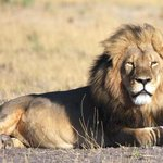 Born Free CEO says Cecil the lions killer should be extradited http://t.co/xEEfaJ0zb6 http://t.co/r5wgZZ0h7w