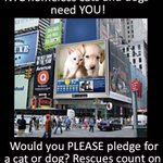 SAVE A LIFE at #NYC pound for a few $ #Pledge❗️ ????DOGS↣https://t.co/WYdC2H5ar2 ????CATS/KITTENS↣https://t.co/GsJ7TD8dU7 http://t.co/Zr9g5RTBHA