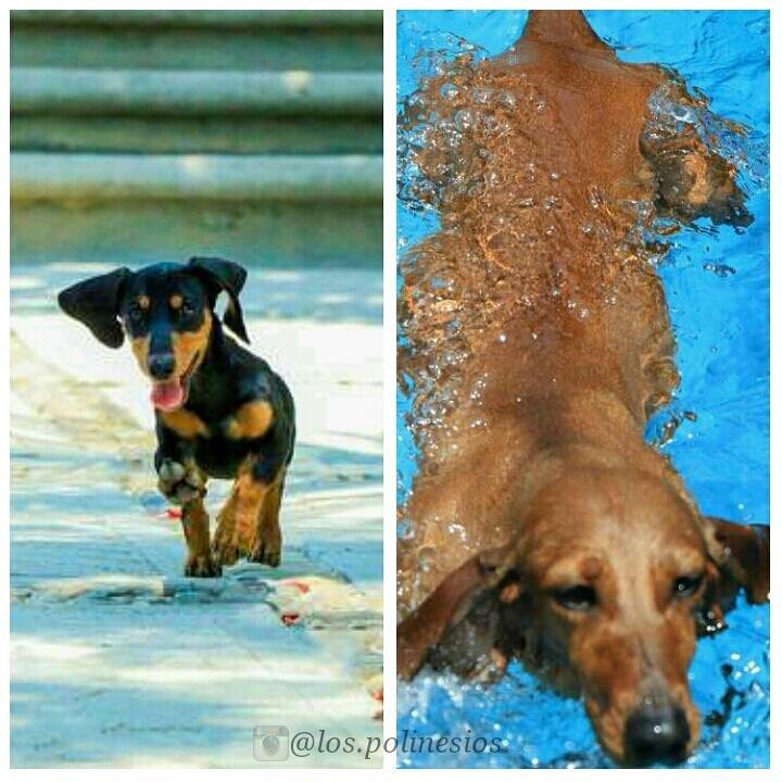 @PPTeamKler & @PPTeamAria las hermosas mascotas de @PlaticaPolinesi las amo ����❤�� http://t.co/cuZUhnVYRu