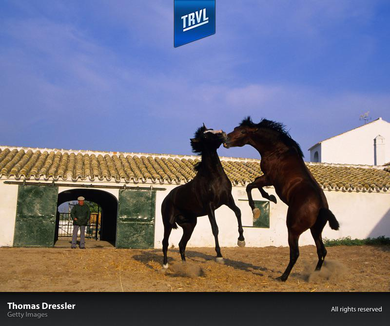 We love #horses! We love #Andalusia in @TRVL for iPad http://t.co/M3Mue0hkYn