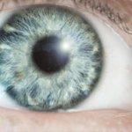 La #esquizofrenia puede ser diagnosticada desde el fondo del ojo ► http://t.co/p5GFJW3svW http://t.co/eWO0MGflKl