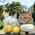 鼻提灯ねこ、かご猫、もふもふ猫など人気作家が競演「ねこ休み展」開催 http://t.co/DNDJWu65ct http://t.co/oYDVwcDd9y