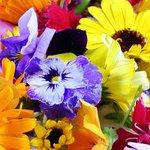 【夏休みに咲く花を、お皿に並べて食べてみたい! 摘んで食べてもいいですか?】 http://t.co/016mg3uB8p 咲いている花がかわいいと、つい「食べてみたいなあ」と思いませんか? 「エディブル.. http://t.co/7HQ2wFrxGh