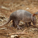 Call this karma... Texas man shoots armadillo, gets hit in face by bullet ricochet http://t.co/7ATpor3XfU http://t.co/jeoFSvg2Rs