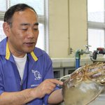 【生きた化石】カブトガニを絶滅の危機から救え! 岡山で自然繁殖が復活した理由 [SPONSORED] http://t.co/ExhfULTBn4 http://t.co/l5Kl9M8XFi