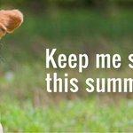 Het is weer warm, dus herhalen we de zomertips nog een keer http://t.co/x8lJmySQz1. Water, schaduw en rust graag. http://t.co/1GEOFA7v6g