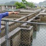 全国でたった一箇所のカブトガニの繁殖地。絶滅の危機を救ったのは… [SPONSORED] http://t.co/ExhfULTBn4 http://t.co/gQgp6RX8KP