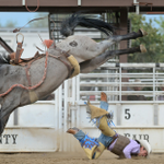 ICYMI: Rodeo at the 2015 Boulder County Fair http://t.co/rQca1hO7Mz http://t.co/o2sCWW9deD