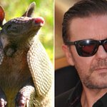 .@rickygervais brilliantly trolls hunter who accidentally shot himself with #karmadillo http://t.co/LjtxflveUX http://t.co/toVL636RIM