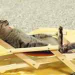 #LesVacancesCestLoccasionDe bien me relaxer au bord de la mer ! http://t.co/a8TOTYAQyr