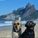The dogs are ready... are you?!? #Rio2016 is right around the corner! #RoadToRio