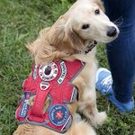 A service dog for Annie, a Vancouver teen with Type 1 diabetes http://t.co/UXfwVO51W1 http://t.co/arMipWd6r9