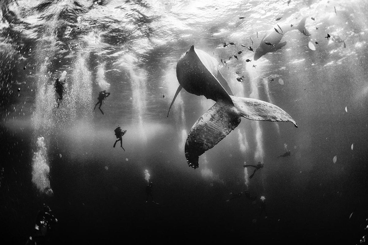 Winners of the 2015 National Geographic Traveler Photo Contest http://t.co/8nqoBQb4lt http://t.co/X40LEp7OdG RT @Peepsqueak
