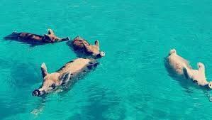 Quiero ir a la playa con mis amigos !! http://t.co/8DK91FDLdV